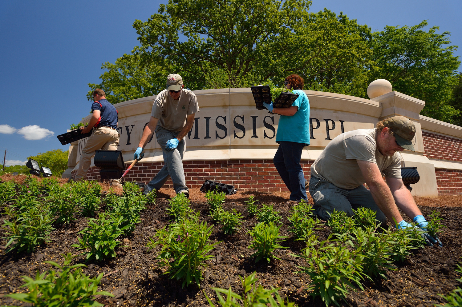 Landscape services university of mississippi for Gardening services