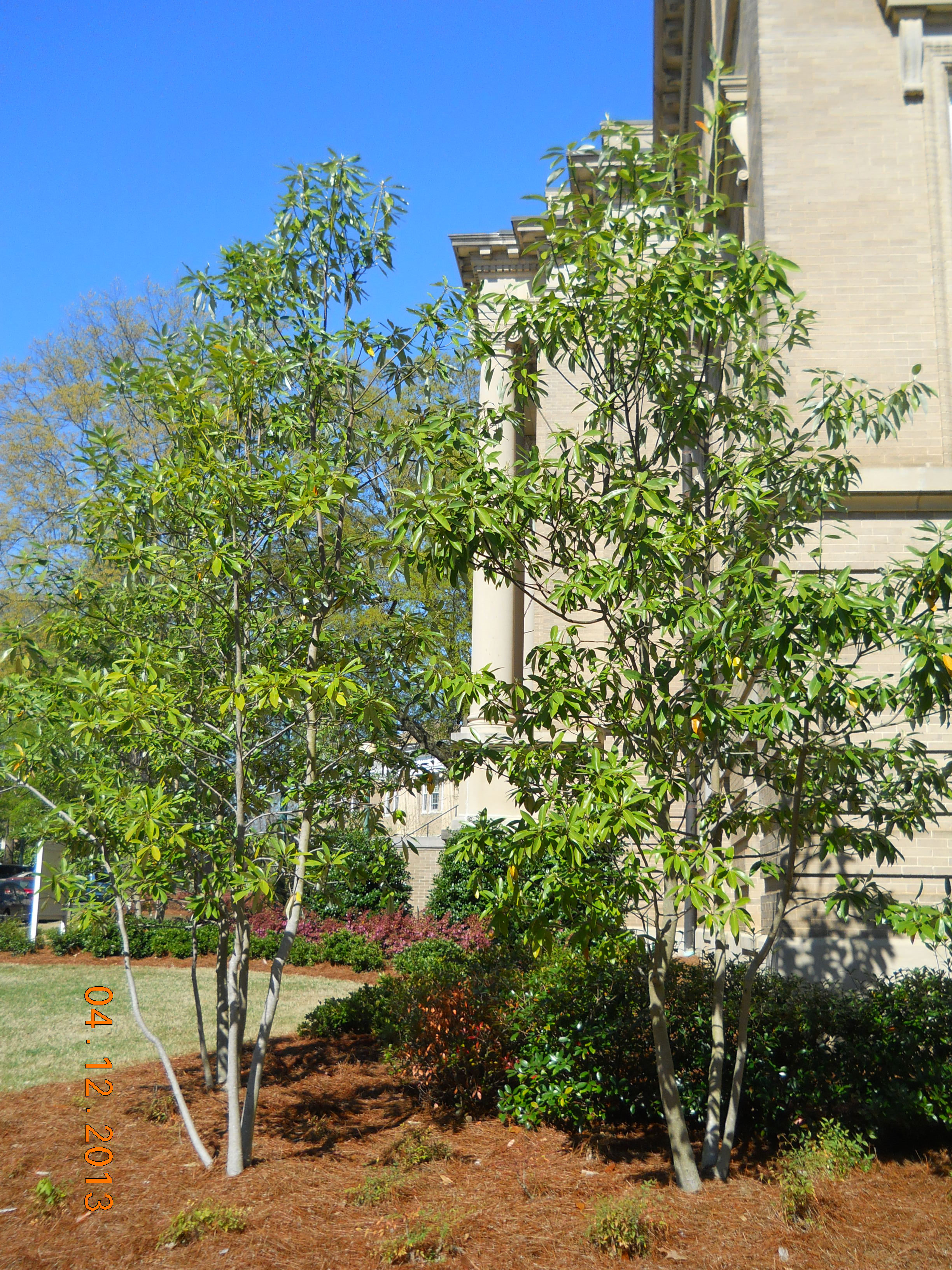 Landscape Services | University of Mississippi