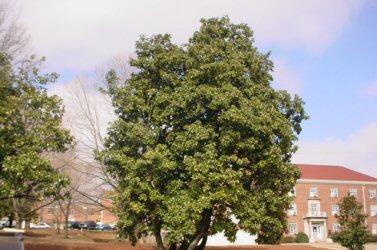 Landscape Services University Of Mississippi