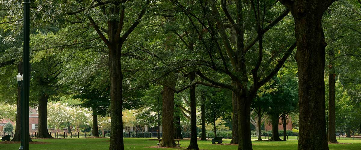 Faculty Senate | University of Mississippi