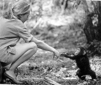 jane goodall formed roots